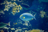 A view of an exotic fish in aquarium poster