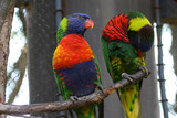 Colorful Captive Birds poster