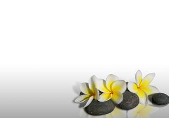 Fleur de frangipanier sur pierres