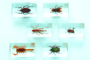 Collection of insects, fear, phobia, hobby, concept
