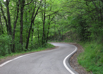 Road in a wood