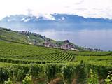Fototapety terrasses pour un vin exquis