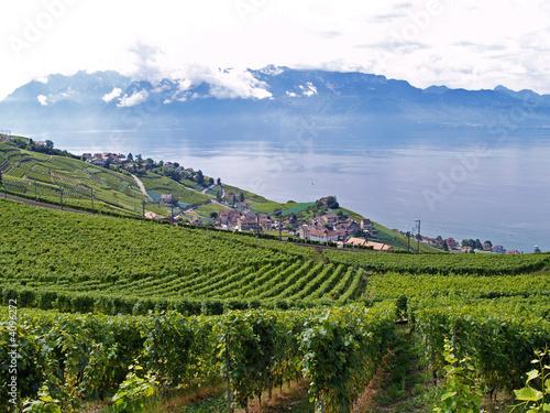 terrasses pour un vin exquis