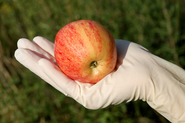 Hand with rubber glove holding apple