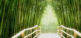 Fototapeta Bedroom - Bambus-Allee © avarooa