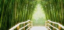 "Постер, картина, фотообои ""Bambus-Allee"""