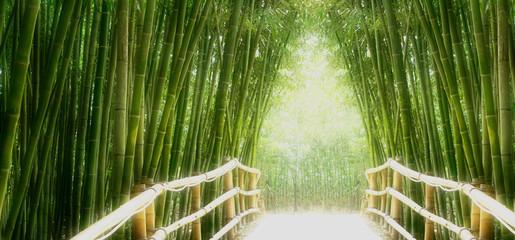 Bambus-Allee © avarooa