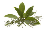 fresh herbs. rosemary, lavender and bay leaf poster