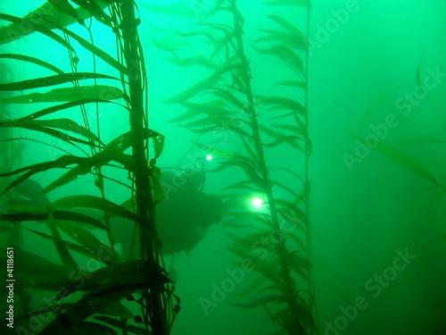 Tuinposter Koraalriffen Diver in Kelp