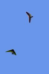two hang-gliders