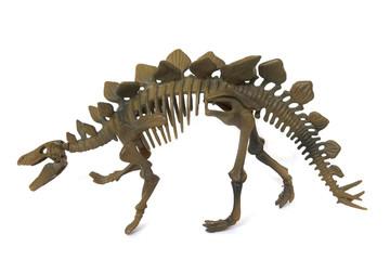 Stegosaurus dinosaur skeleton