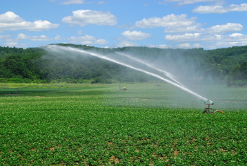 Irrigating Potato Field