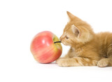 kitten tugging on an apple stem poster