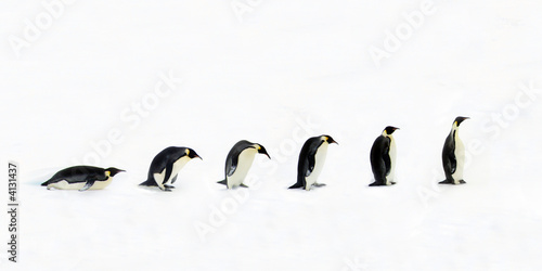 Photo: Penguin Evolution © Jan Will #