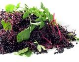 clusters of elder berries poster