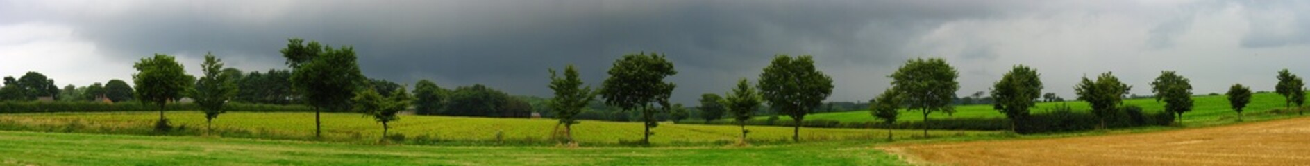 Panoramic Tree Line Under Stormy Sky