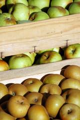 Cagette de fruit