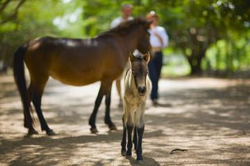 horses baby