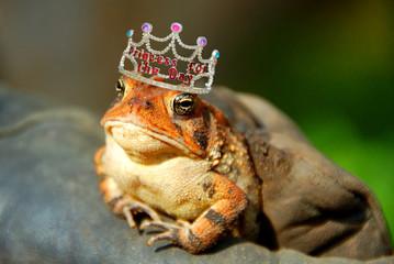 Frog Wearing Princess Crown