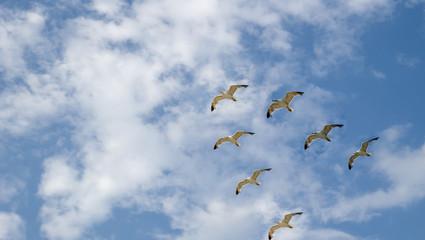 Flight seagull
