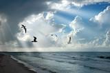 Light and Seagulls - Fine Art prints
