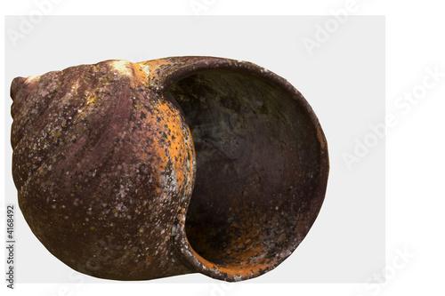 snail's shell