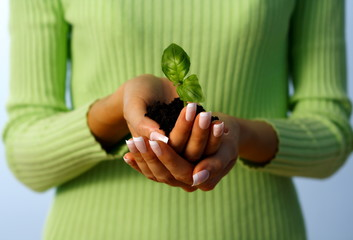 new life protection hands holding a small plant