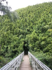 bridge to bamboo abyss - hana hawaii