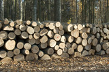 Pile of firewood poster