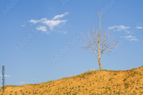Lonely bald tree