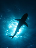Fototapete Meer - Wasser - Fische