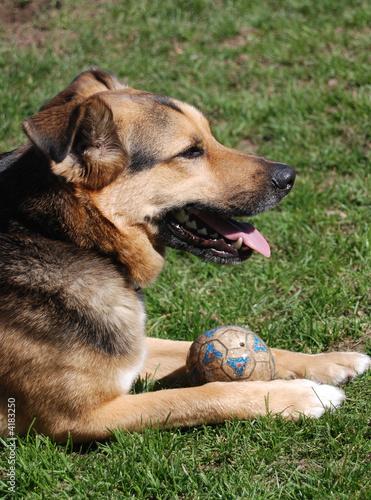 Dog & His Ball