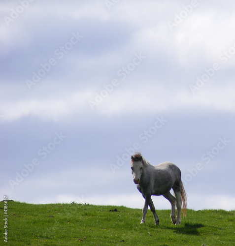 Grey horse on hill