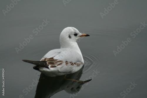 bird in hyde park