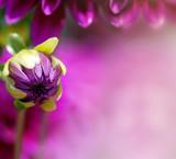 Purple flower petal background