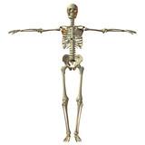 Muž 3D Skeleton