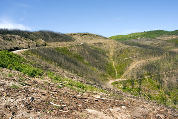 Serra da Arade, Viseu, two years after a great fire