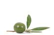 olive 41