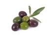 olive 52