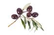 olive 57