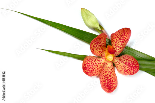 fresh orchid with green leaf