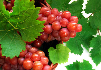 Wine grapes with leaves in wicker basket