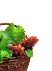Grape clusters with leaves in basket