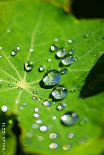 plante et goutte d'eau © Baizeau Lionel