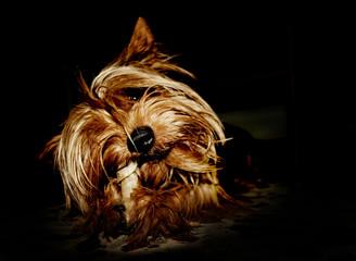Perro y hueso