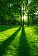 roleta: Green park