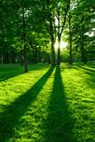 Fototapety Green park