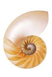 Nautilus Split Half