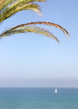Palm tree and view of sea and yacht
