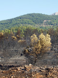 forest fire Greece